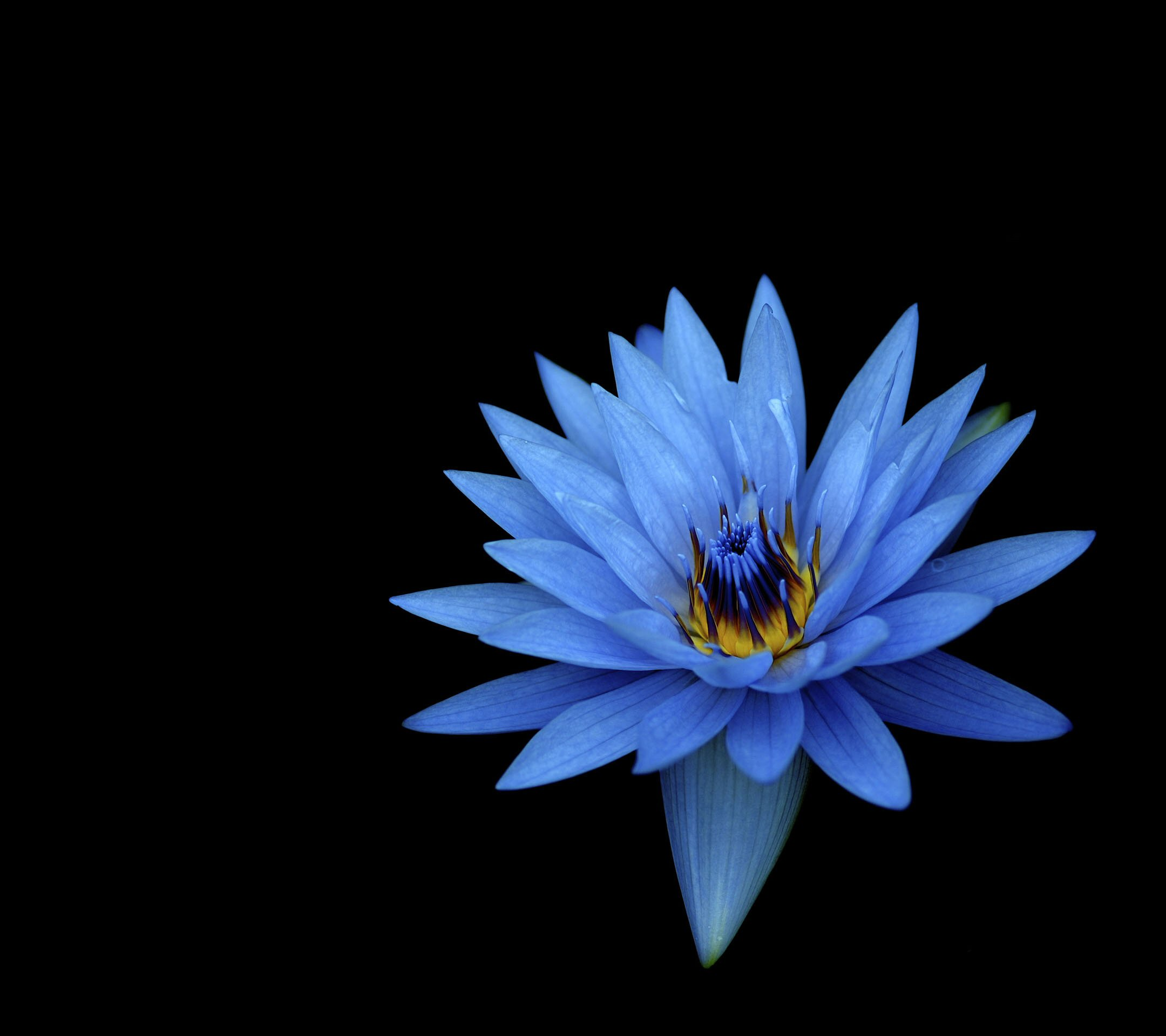 Sony Xperia Z1 Wallpapers blue flower hd1080pXperia Z1 Stock Wallpaper