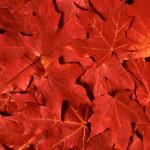 Sony_Xperia_Z1_Wallpapers_heat